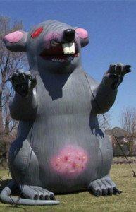 rats_three