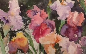 Irises by Stephanie Navon-Jacobson