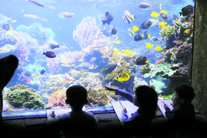 New Color students' on a field trip to the Long Island Aquarium (Photo courtesy of Teacher Tony)