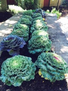 The cabbage plants add texture for fall.