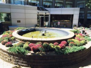 The fountain after the planting