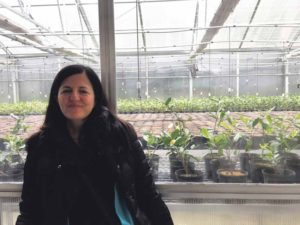 Noushin Ebrani's knowledge of tea turned into her booming online business, Heavenly Tea Leaves.